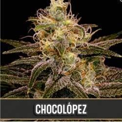 Chocolopez · Blimburn Seeds