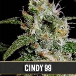 Cindy 99