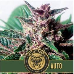 Grizzly Purple Auto ·...
