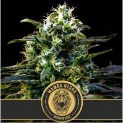 Mamba Negra · Blimburn Seeds
